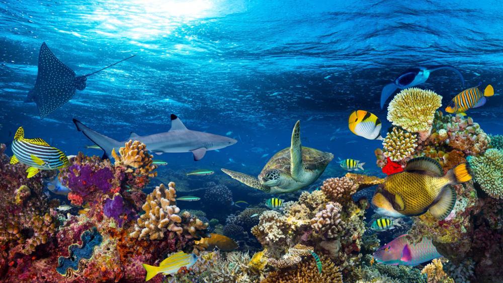 Quelques superbes spots de plongée au Pérou